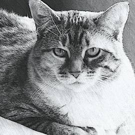 Kathleen Struckle - Tigerlily