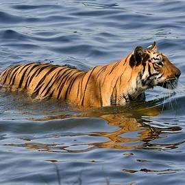 Fotosas Photography - Tigress of the Lake