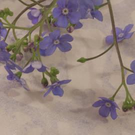 Sandra Foster - Tiny Blue