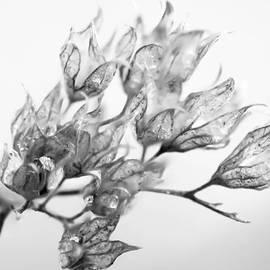 Jerri Moon Cantone - Tiny Flowers