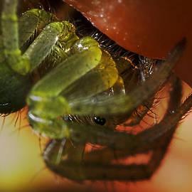 Mr Bennett Kent - Tiny Spider