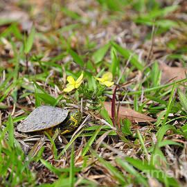Al Powell Photography USA - Tiny Turtle