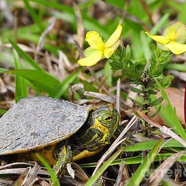 Al Powell Photography USA - Tiny Turtle Close Up