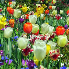 Elizabeth Dow - Tiptoe Through The Tulips
