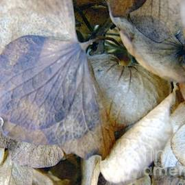 RC deWinter - Tissue Paper Petals