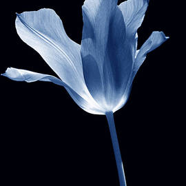 Jennie Marie Schell - To the Light Tulip Flower in Blue