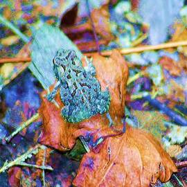 Chuck  Hicks - Toad On A Leaf