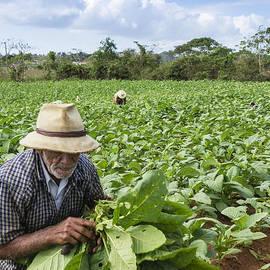 David Litschel - Tobacco Farmer Vinales Cuba