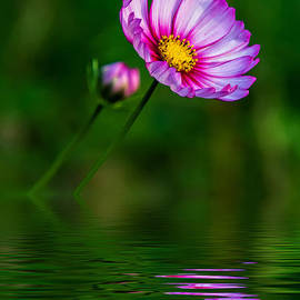 Steve Harrington - Together...Always Reflection