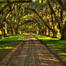 Reid Callaway - Live Oaks of Tomotley Plantation
