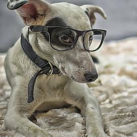Darren Wilkes - Top Dog