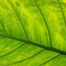 Art Block Collections - Topical Leaf-2