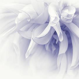Jennie Marie Schell - Touch of Lavender Dahlia Flower