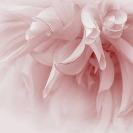 Jennie Marie Schell - Touch of Pink Dahlia Flower
