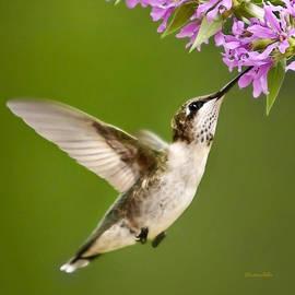 Christina Rollo - Touched Hummingbird Square