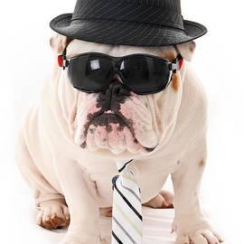 Jt PhotoDesign - Tough Dog
