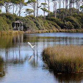 Rosanne Jordan - Tranquil Willet Pond