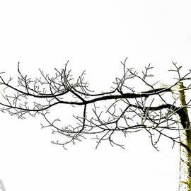 Fei A - Tree 1