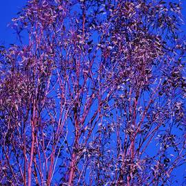 Linda Brody - Tree Abstract Purple Blue