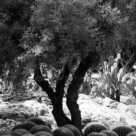 Kathleen Struckle - Tree And Cactus