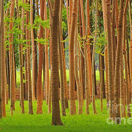 Kris Hiemstra - Tree Art