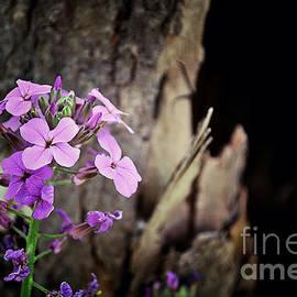 Miss Dawn - Tree Bark And Pink Purple Wildflowers