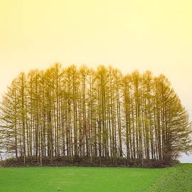 Hakai Matsu - Biei famous tree