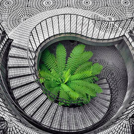 Daniel Furon - Tree Fern in the Stairs