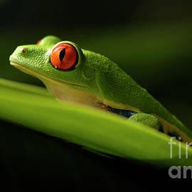 Bob Christopher - Tree Frog 7