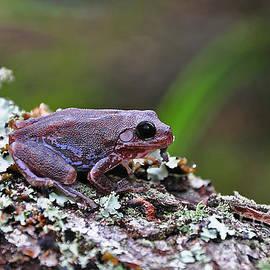Al Powell Photography USA - Tree Frog on an Old Log