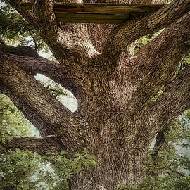 Wayne Meyer - Tree House