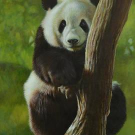 Karl Hamilton-Cox - Panda Tree Hugger