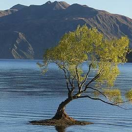 Stuart Litoff - Tree in Lake Wanaka