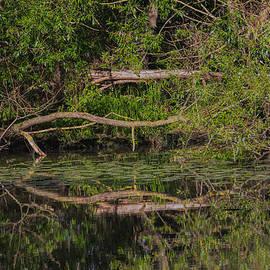Leif Sohlman - Tree Mirroring In Water