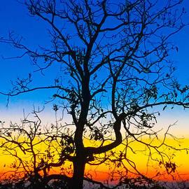 John Roberts - Tree Of Many Colors