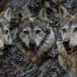 Ernie Echols - Tree of Wolves
