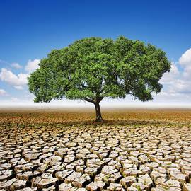 Carlos Caetano - Tree On Dry Land