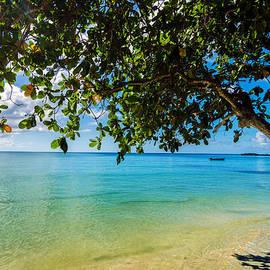 Jess Kraft - Tree Over Caribbean Sea