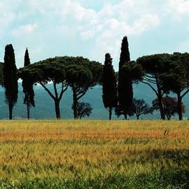 Heiko Koehrer-Wagner - Tree Row in Tuscany