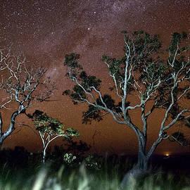 Dirk Ercken - Tree savanna on the Serrania de Chiquitos Bolivia