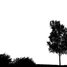 Alexey Stiop - Tree silhouette