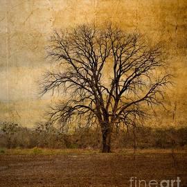 Gary Richards - Tree Spirit
