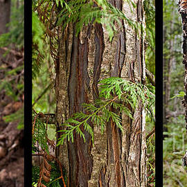 Sandi Mikuse - Tree Wear by NATURE