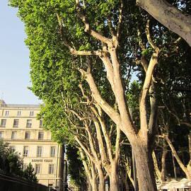 Pema Hou - Treed Avenue