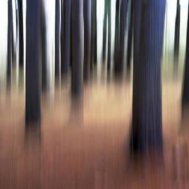 David Stone - Trees #3