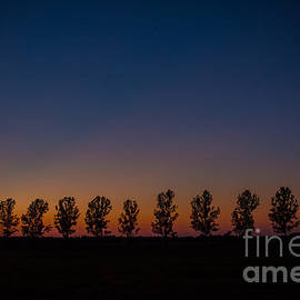 Cheryl Baxter - Trees in a Row Sunset