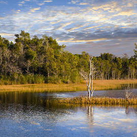 Debra and Dave Vanderlaan - Trees in the Everglades