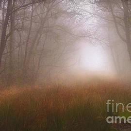 Curtis Radclyffe - Trees Mist 1