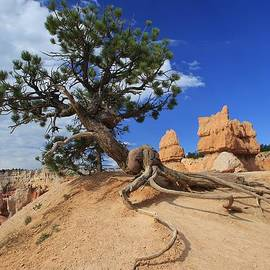Mo Barton - Trees of Bryce Canyon 2