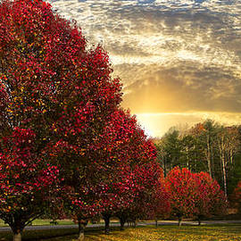 Debra and Dave Vanderlaan - Trees on Fire Panorama
